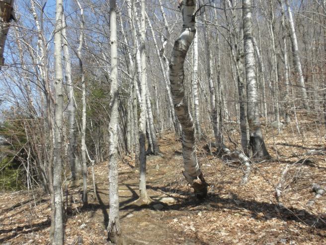 hikingpath